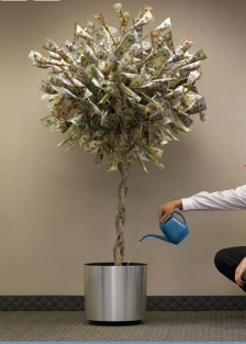 money-tree-11
